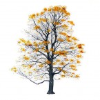 Magis TREE AUTUMN Art Print